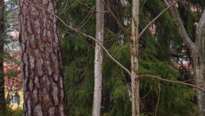 Skogen - naturtillgång i ny tappning
